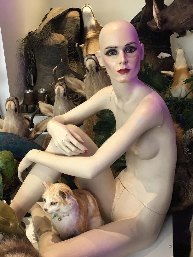 Stéphanie naturalise souvent des chats