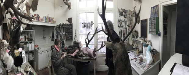 L'atelier de Stéphanie Barthes, taxidermiste