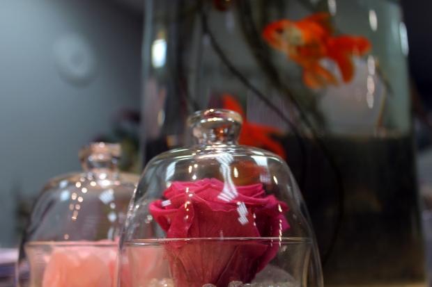 Les roses éternelles ont en moyenne une durée de vie de trois ans