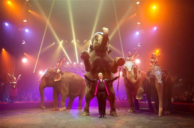 John Vernuccio, responsable des animaux mais aussi dompteur, avec ses éléphants en plein spectacle. © Fabrice Vallon